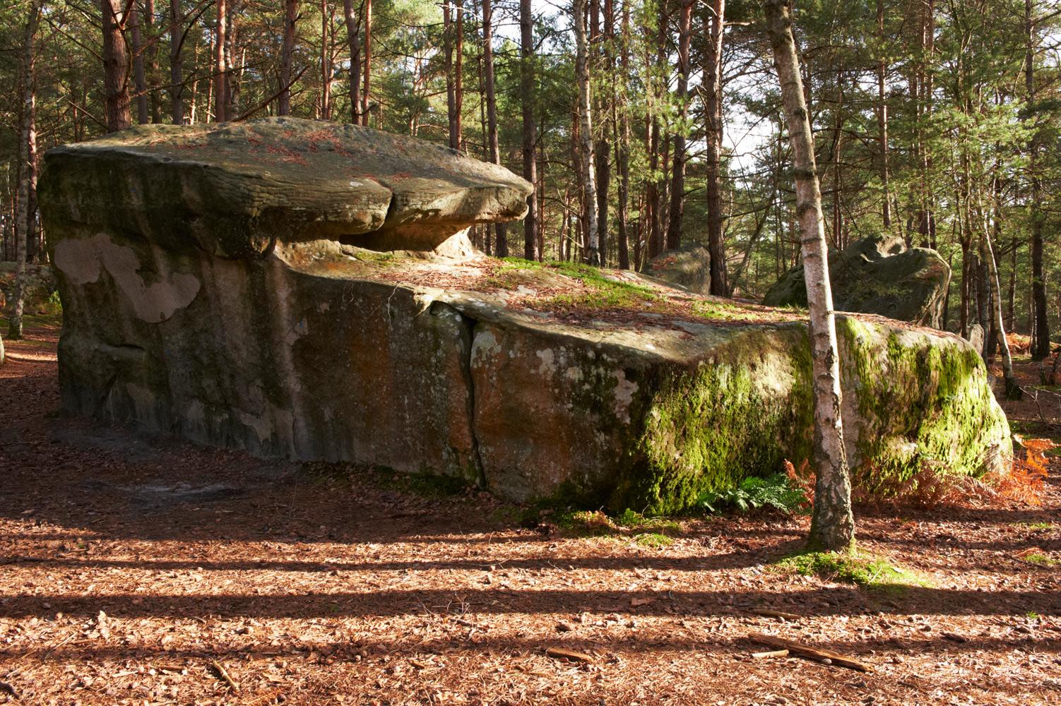 Forêt de Fontainebleau, Seine-et-Marne