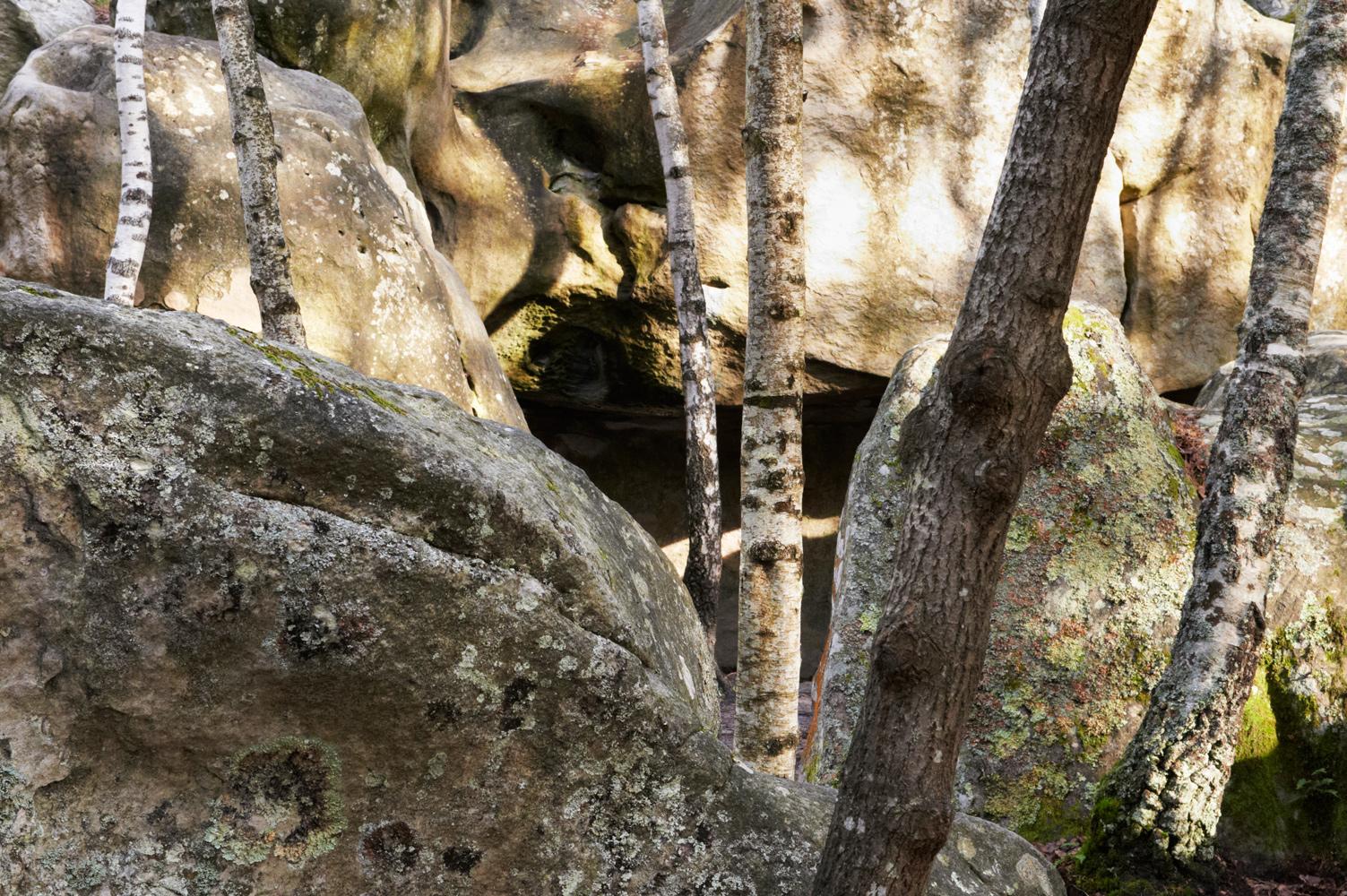 Des arbres et des pierres, Forêt de Fontainebleau