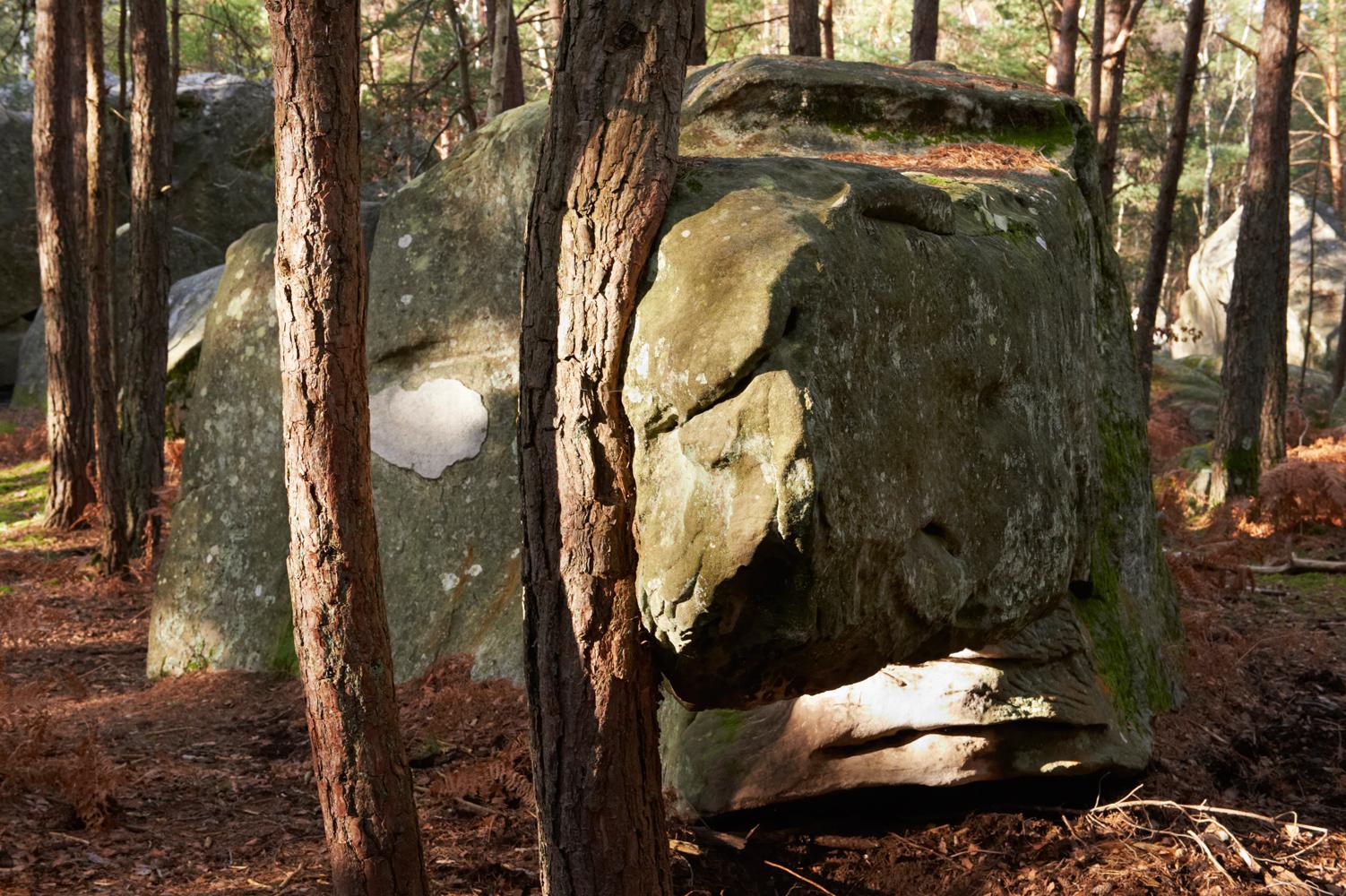 Monstre de pierre, Forêt de Fontainebleau
