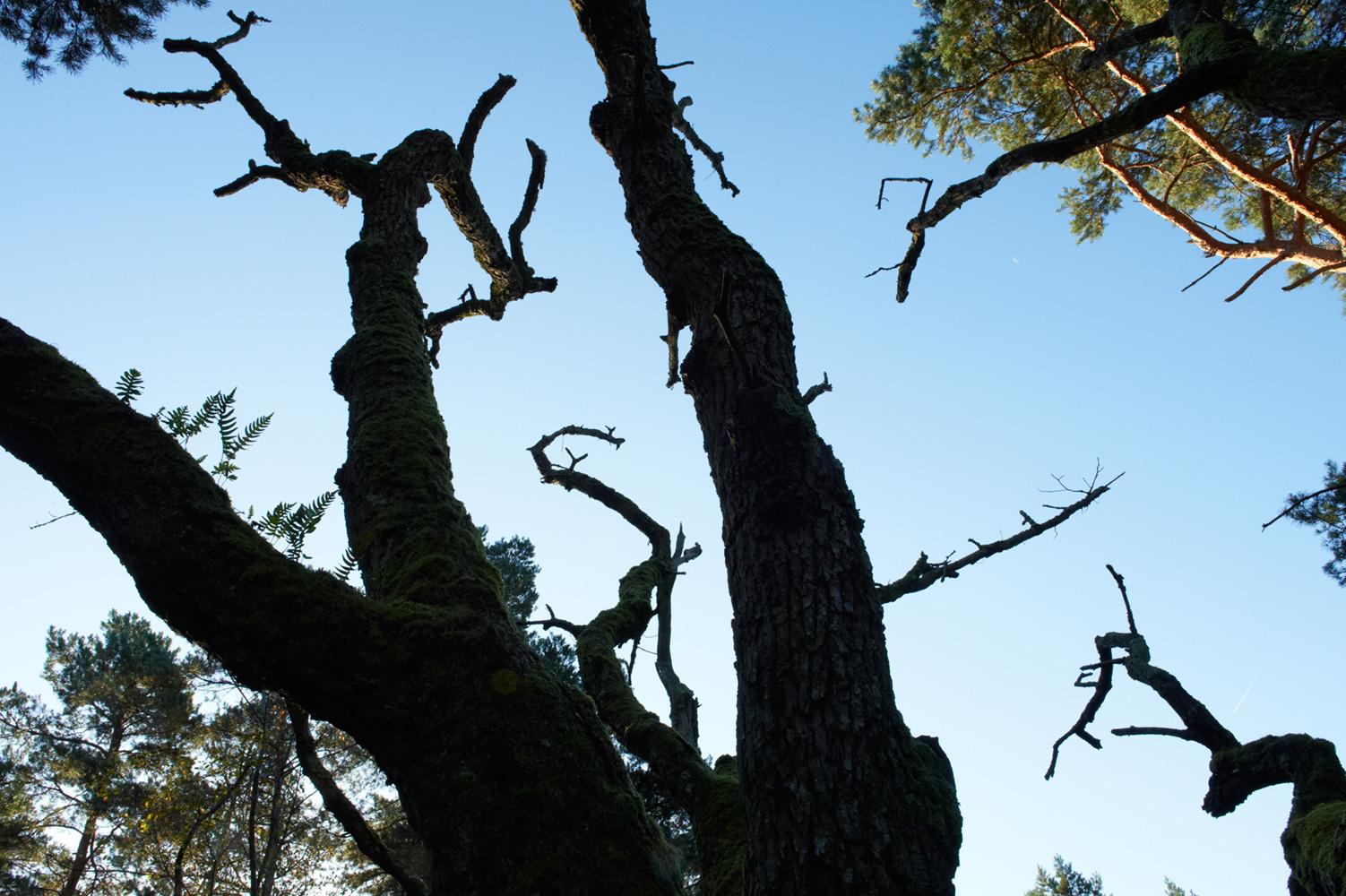Forêt de contes de fées