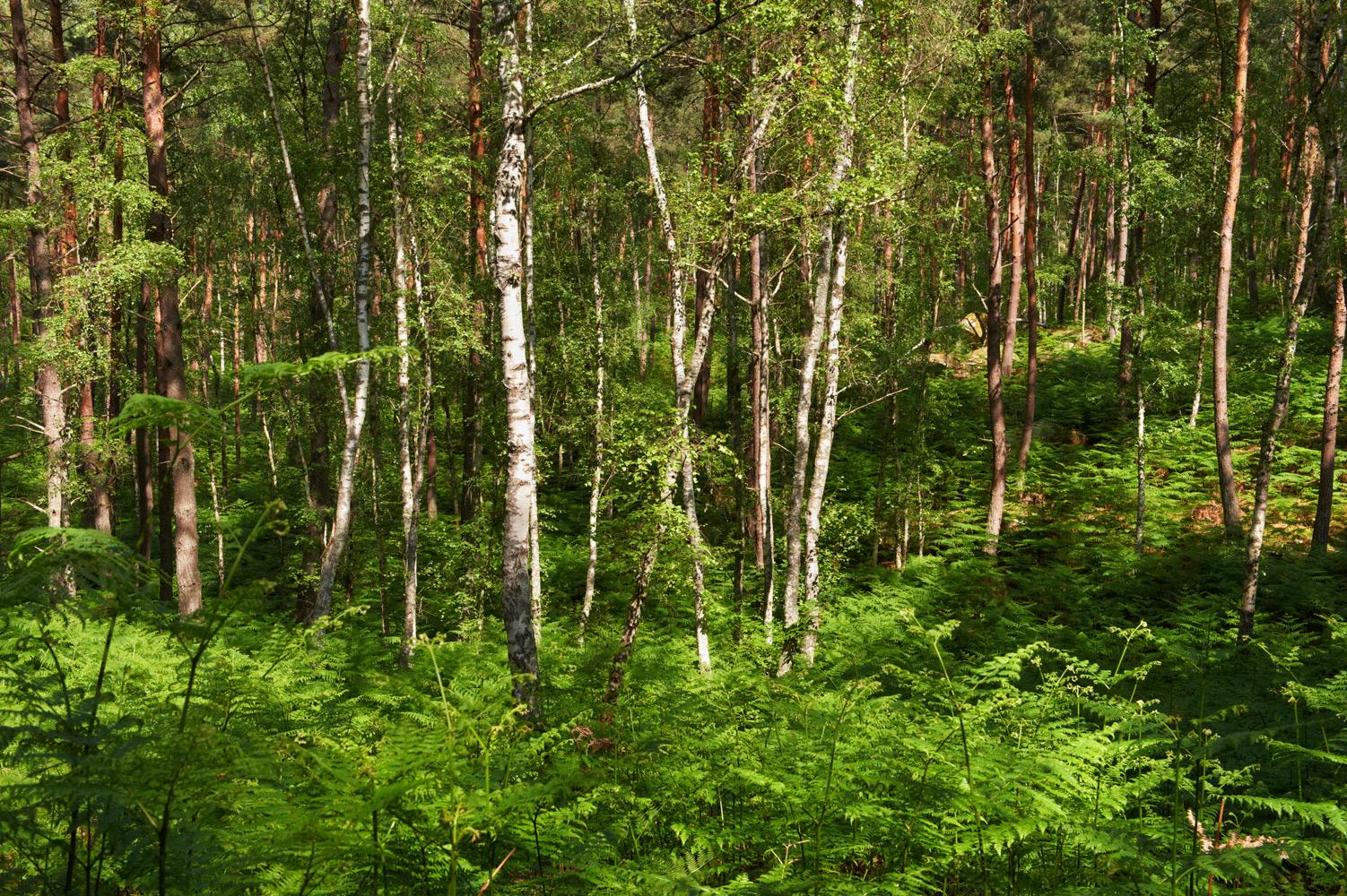 Végétation dense
