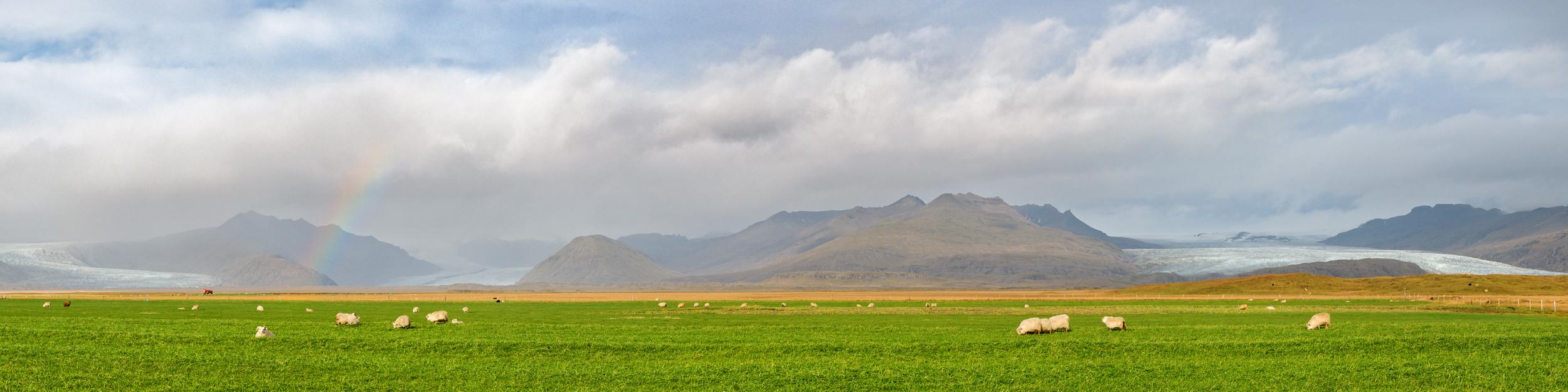 islande_route-des-moutons