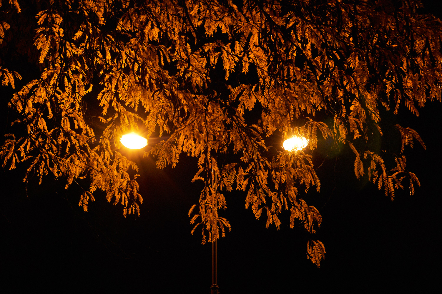 Night Lights – lumières nocturnes