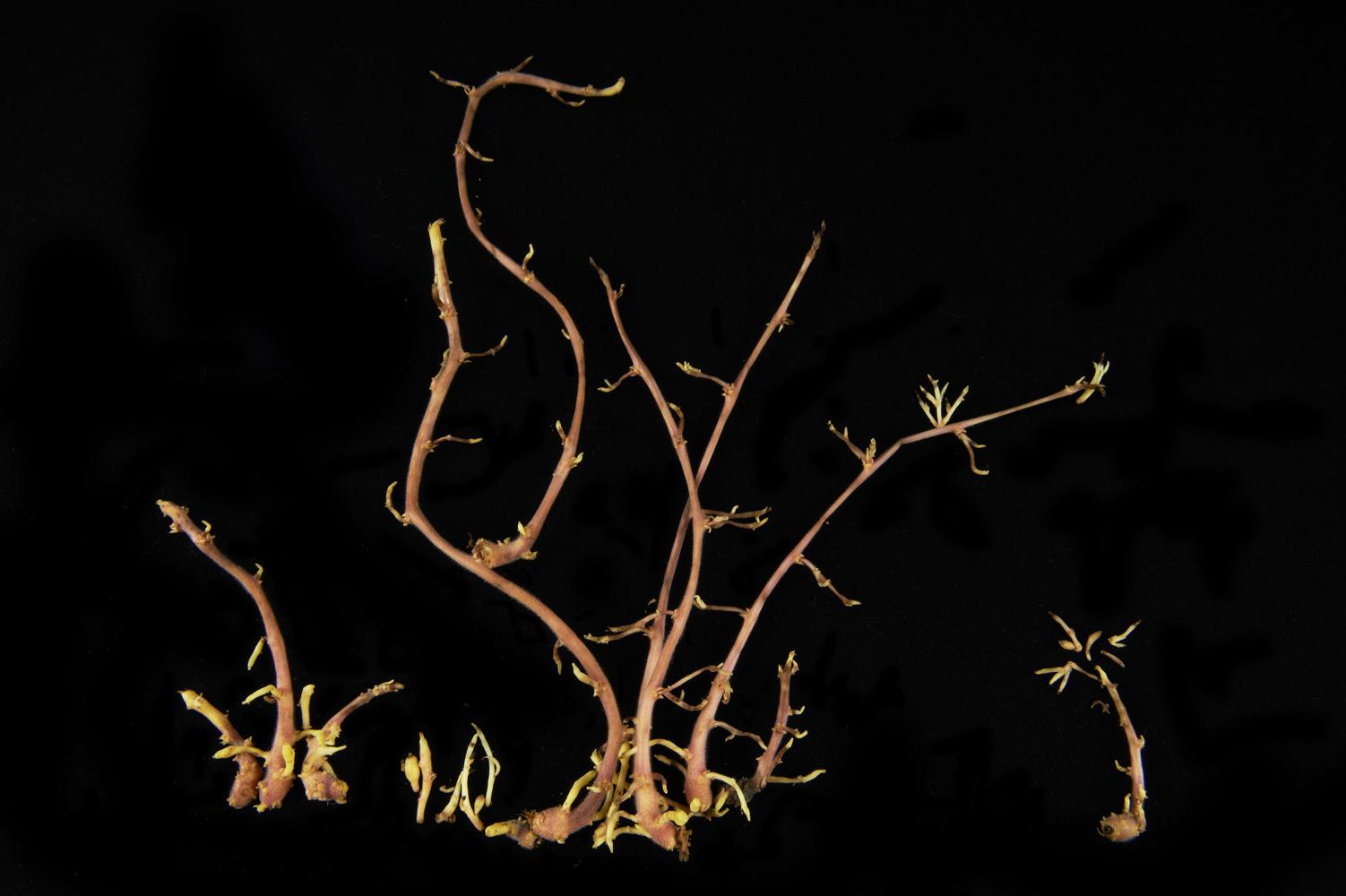 arbres_en_germes