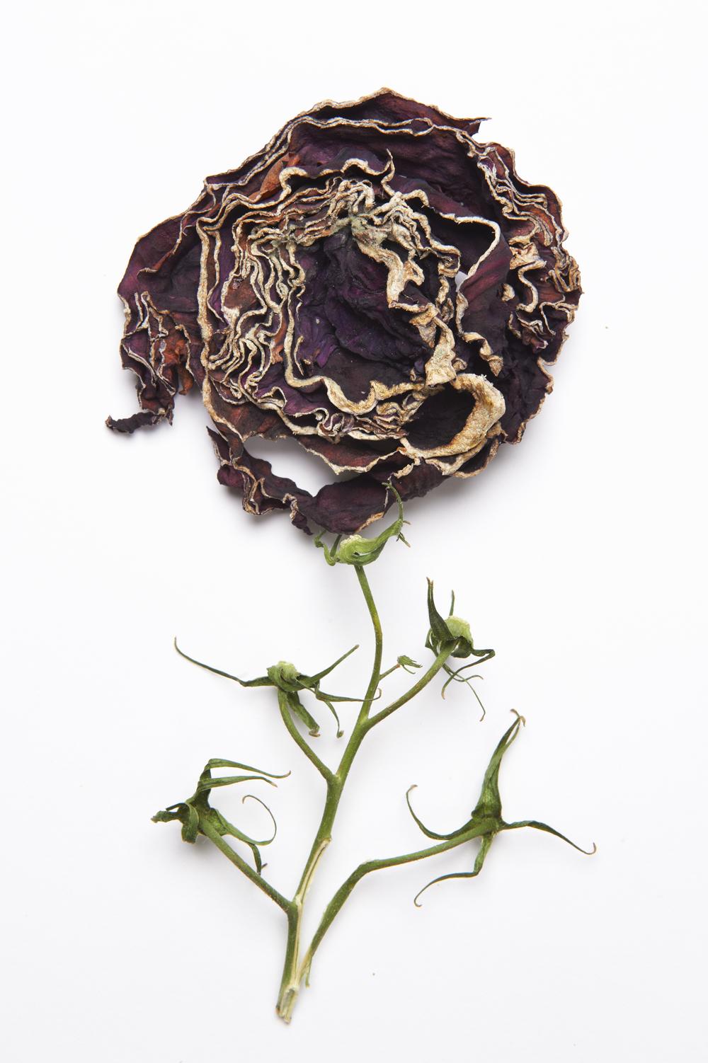 legumes_seches_fleur